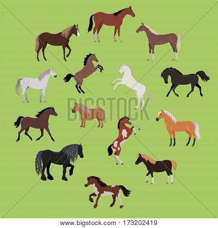 Illustration of different breeds of horses. Various color horses. Horse icon set. Set of horses in action stand, run, jump, go. Horseback riding. Isolated vector illustration on green background.