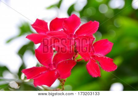 red flowers with green and white background