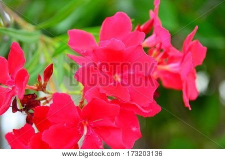 Red flowers with leaves on the tree