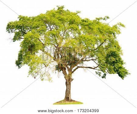 tree nature on white background of Isolated