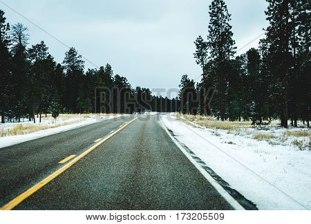 Highway With Snow And Pine Trees