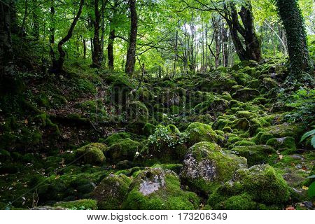 nice forest