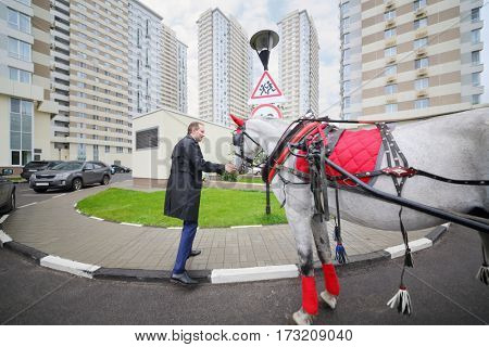 Smiling man touches horse in harness near residential buildings