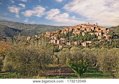 Seggiano, Grosseto, Tuscany, Italy: landscape at sunrise of the ancient hill town on the slopes of Mount Amiata with olive grove in foreground