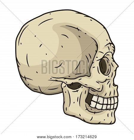 Human skull in hand drawn style. Vector illustration