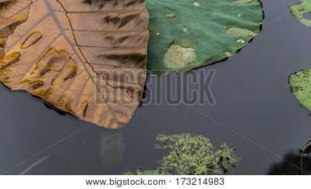 leaves on the water autumn wet nature