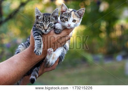 Two little beautiful kittens on a mans hand with blurred green bokeh background