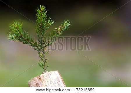 Photo Of The Abstract Stub In The Nature With Blurred Dark Backg