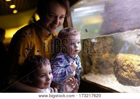 Family looking at aquarium at amusement center