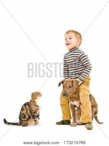 Happy kid playing with a puppy pitbull and cat, isolated on white background