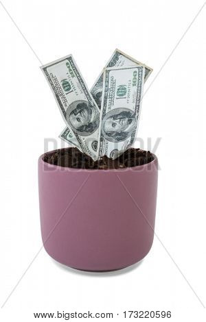 Money growing in pot plant on white background