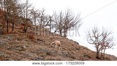 Donkey At Pasture On A Hill