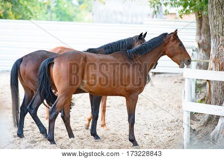 Beautiful horses on farm. Horses in arena