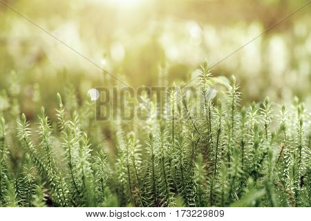 Abstract natural background with green moss in the forest. Seasonal spring eco concept
