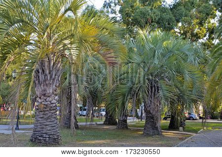 Beach with palm trees , the resort Gagra, Abkhazia