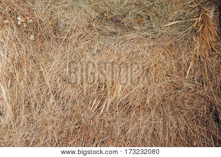 Texture hay closeup in color. Fodder for livestock and construction material.