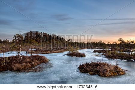 Bog islands warmed by the setting sun