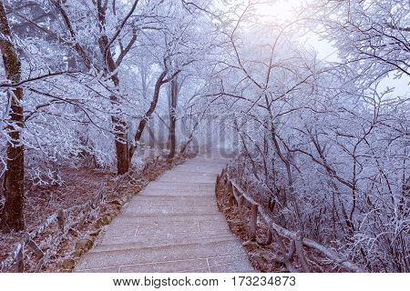 Winter sunrise landscape in Huangshan National park. Park located in Anhui province in China. It is a UNESCO World Heritage Site.