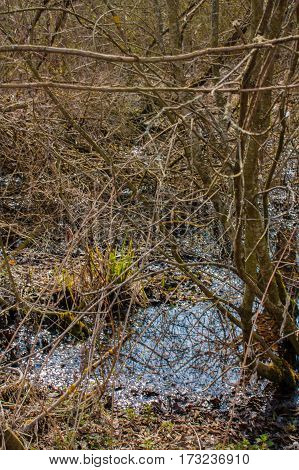 twisted branches of bushes growing near the water