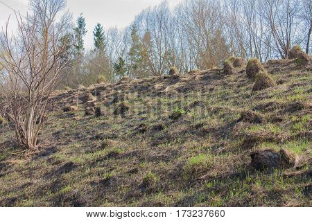 tussock land dug by moles on the slopes of the ravine