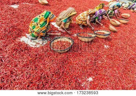 Working With Red Chillies