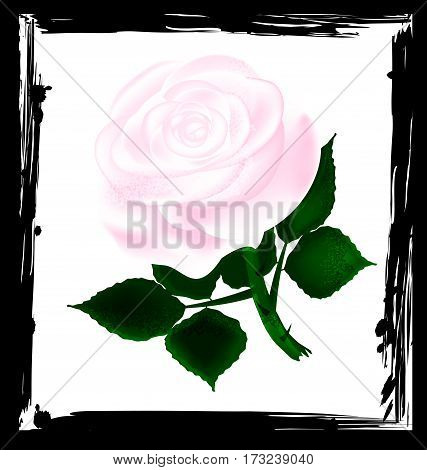 black background with white abstract and light-colored fantasy flower rose