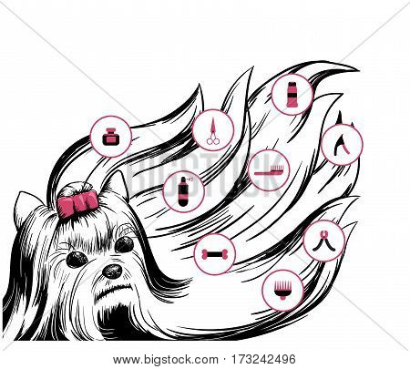 Beauty dog salon concept with cute sketch yorkshire terrier and professional grooming accessories isolated vector illustration