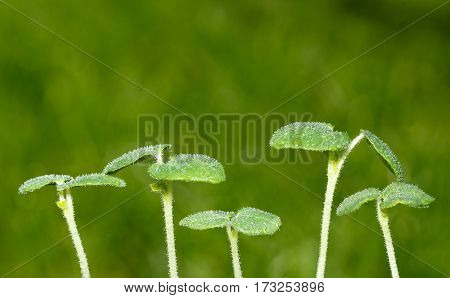 Vegetable Sprouts