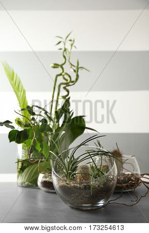 Florarium in glass vases with succulents on gray table