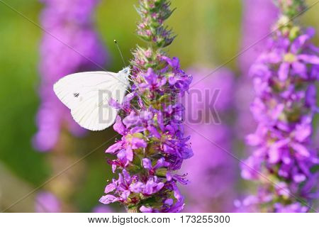 Beautiful blossom flowers with butterfly. Nature scene with sun in Sunny day. Spring flowers. Abstract blurred colorful background in Springtime.