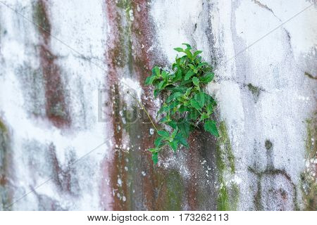 Close up of plant on a cement wall