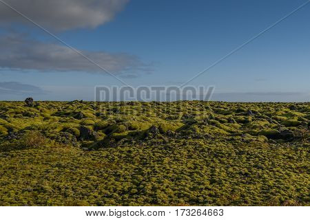 Eldhraun lava field (moss cover on lava rock) beautiful volcanic landscape of Iceland in summer season