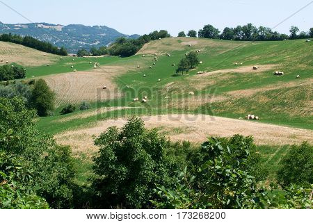 Apennines valley at Emilia Romagna on Italy