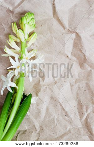 Flower hyacinth, Rumpled Kraft paper texture background close-up. Grunge old paper surface, rustic style. For modern romantic pattern, wallpaper or banner design. Place for your text