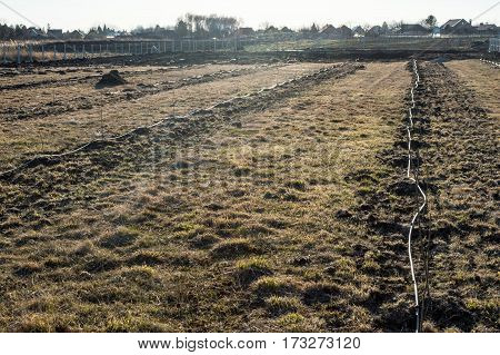 Drip Irrigation of young fruit trees. Several rows of fruit trees from which the water-hose for drip irrigation