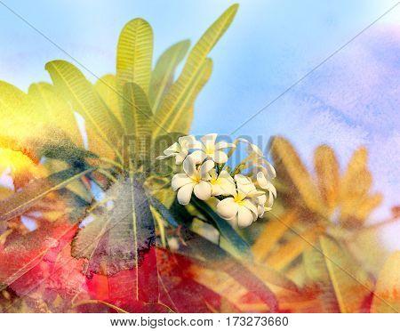 Photo macro beautiful frangipani bright sunny day