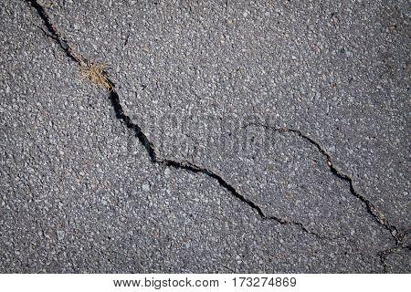 Fissure In Asphalt