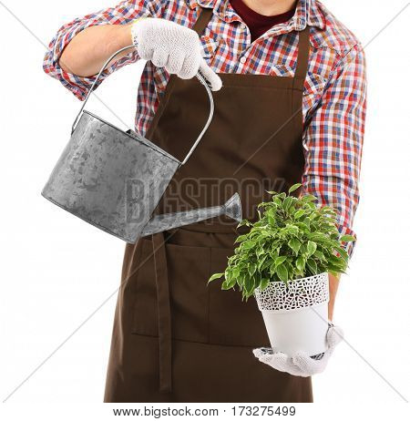 Male florist watering house plant on white background