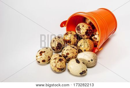Small decorative buckets filled quail eggs close up
