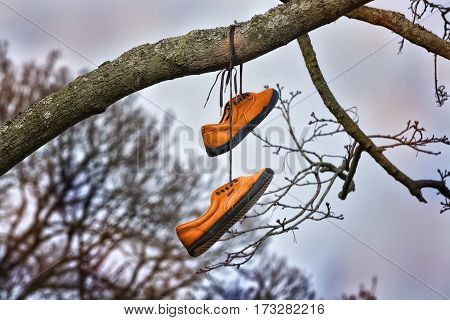 Old yellow shoes hang on the tree as a symbol of freedom, wandering and happiness.