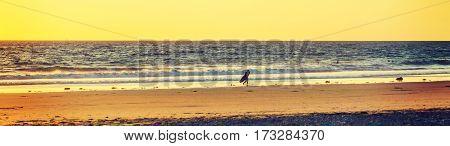 Surfer silhouette in Newport Beach at sunset California