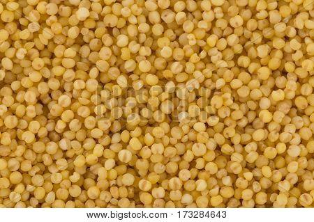 Dry Millet Closeup
