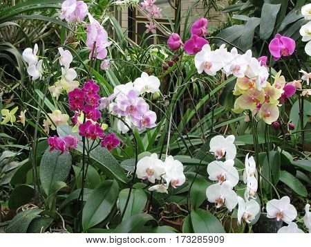 Lilac And White Orchid Flower