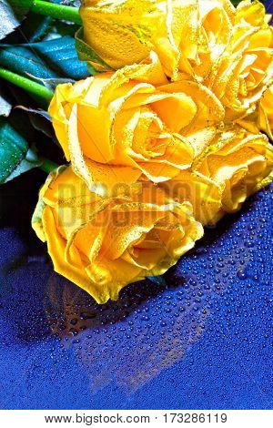 A Bouquet Of Yellow Roses With Drops On A Blue Background