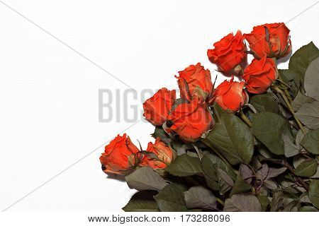 a lot of red roses on a white background.