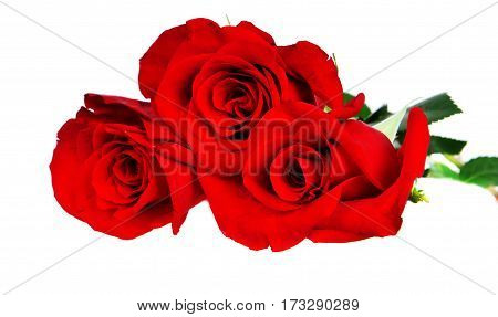 Three red roses isolated on the white background.