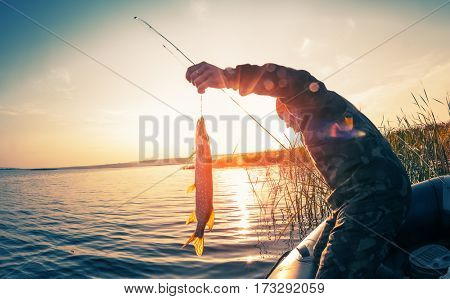 Fisherman with fish on the boat at sunset