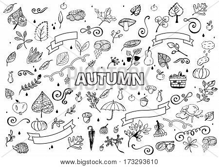 Vector set of Different Hand Drawn Autumn Design Elements. Vector Autumn Doodle Illustration. Autumn Doodles. Coloring book. Leaves, curls, mushrooms, hedgehog, chestnut.