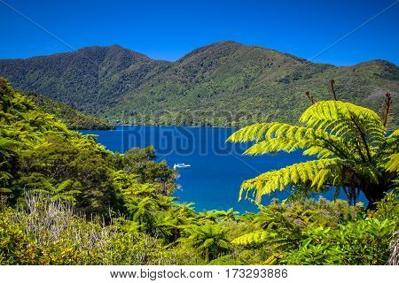 Tree Ferns And Turquoise Blue Water In Marlborough Sounds