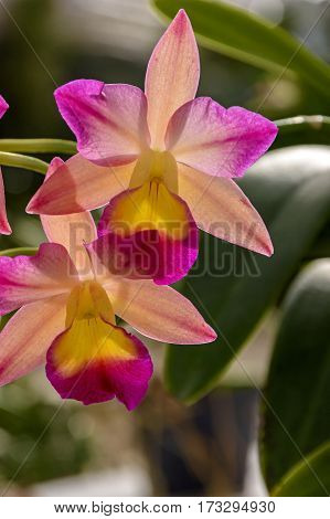 Details of orchid with colors leaf textures and petals
